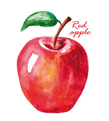 Watercolor red apple.