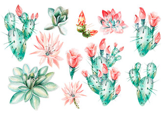 Watercolor set with succulents and cacti . Realistic illustration