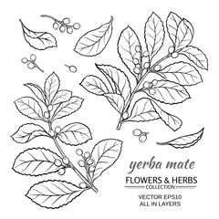 yerba mate vector set