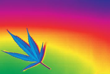 Beautiful rainbow marijuana ganja background