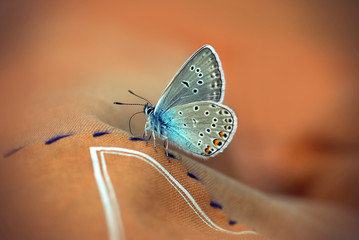 Close up of Beautiful butterfly