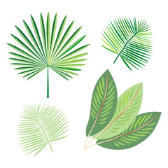 Set of tropical exotic palm leaf. Vector.