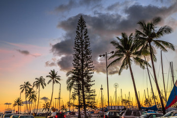 Beautiful palm trees at sunset surrounding the Ala Wai Harbor near Waikiki and Honolulu downtown. Oahu Island, Hawaii, United States.