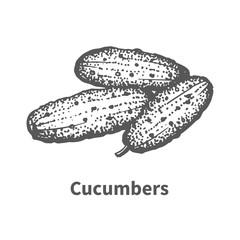 Vector illustration hand-drawn cucumbers