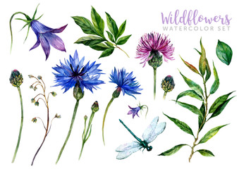 Fototapeta Hand drawn watercolor wildflowers