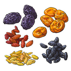 Set of dried fruits - prunes, apricots and raisins, sketch style vector illustration isolated on white background. Drawing of dries plums, dries apricots and a mix of red, golden and black raisins