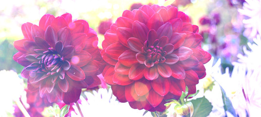 Grußkarte - rote Dahlien - Spätsommer Blumen