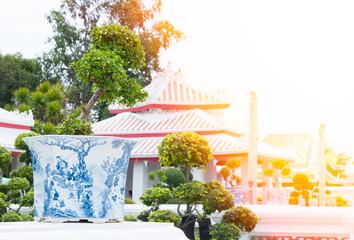 bonsai tree in flowerpot  in public park,trees bonsai are classic elements of interior and landscape design