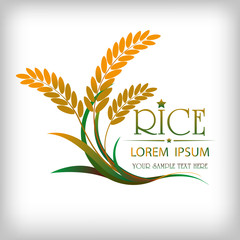 grain organic natural product with black background. concept vector illustration ,Rice gold logo vector design.