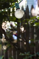 Light bulbs in the garden