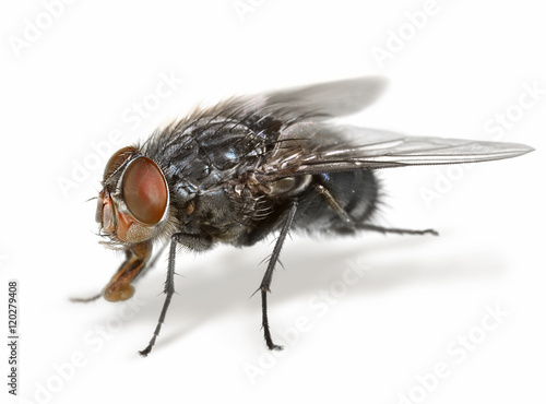 Anatomy of a fly\