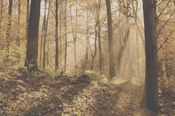unusual forest in autumn, instagram filter