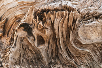 Meandering texture of dry driftwood up shot. Wall mural