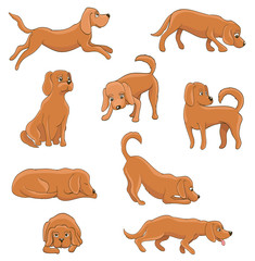 cute cartoon dog in various poses. funny pet sitting, standing, lying