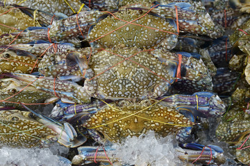 a lot of Flower crab, Blue crab, Blue swimmer crab, Blue manna crab, Sand crab to selling in sea food market background
