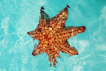 Stella marina arancione immersa nel mare dei Caraibi