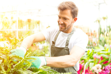 Young attractive florist cutting leaves of a plant