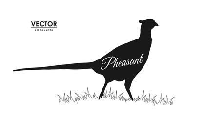 Vector illustration: silhouette of pheasant.