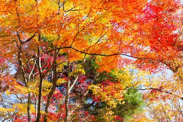 Wall Mural - Farbenfroher Herbstwald