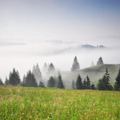 Carpathians Mountains landscape with green grass, morning fog and pines