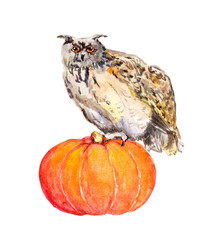 Owl on pumpkin. Halloween watercolor picture.