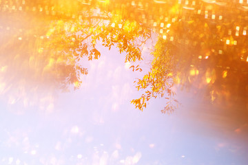 blurred abstract photo of light among trees and glitter