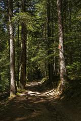 Un sentier dans les bois du Vercors