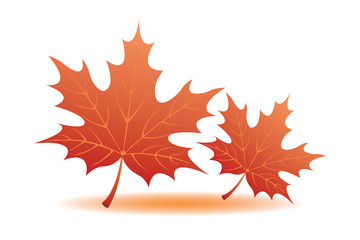 Autumn Leaves, vector illustration
