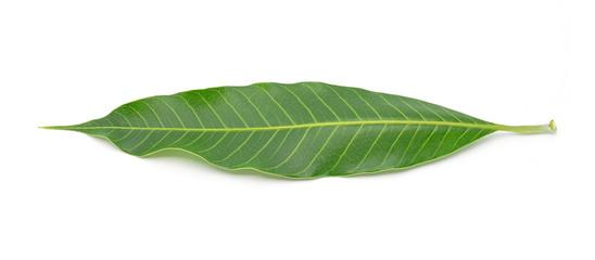 Green mango leaf on a white