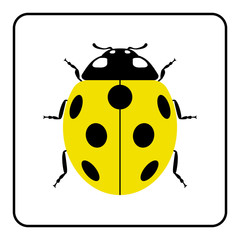 Ladybug small icon. Yellow lady bug sign, isolated on white background. Wildlife animal design. Cute colorful ladybird. Insect cartoon beetle. Symbol of nature, spring, summer. Vector illustration