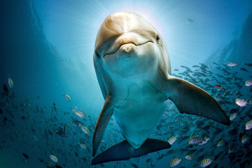 Foto op Plexiglas Onder water dolphin underwater on reef close coming to you