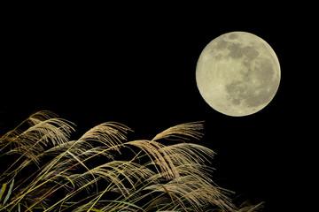 お月見イメージ 月とススキ