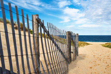 Fototapete - Path way to the beach at Cape Cod