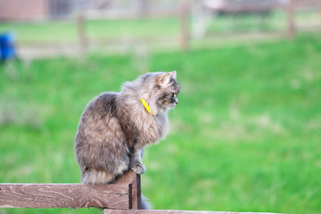 Cat sitting on wooden fence