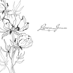 Set of line drawing flovers, wild flovers, hand drawn vector illustration