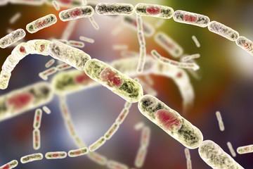 Bacteria Bacillus anthracis