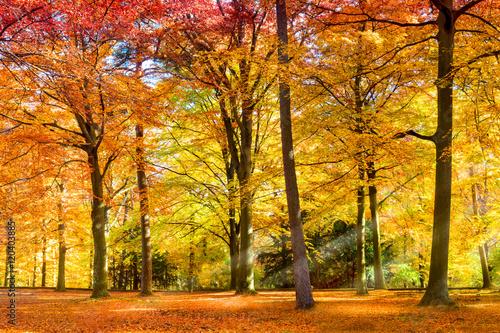 Wall mural Sonniger Wald im Herbst