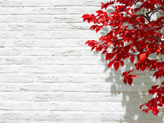 white wall red leaf autumn