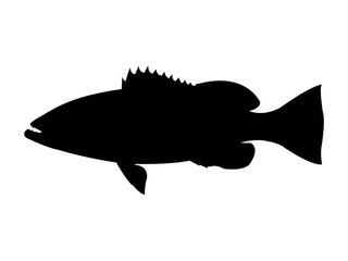 Gag grouper fish silhouette. Vector illustration.