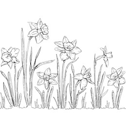 hand drawn graphic flower Narcissus on white background