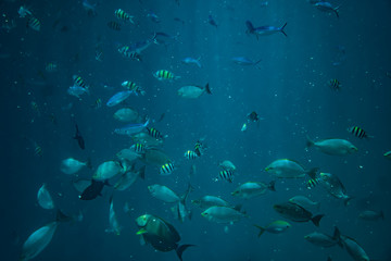 Diving, snorkling with school of fishes underwater of tropical sea