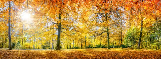 Herbstwald Panorama im Sonnenlicht