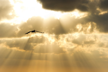 Bird Flying Silhouette Sun Rays