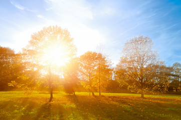 Autumn landscape -yellowed autumn park in autumn sunny evening. Colorful autumn view of sunset park with sunbeams.
