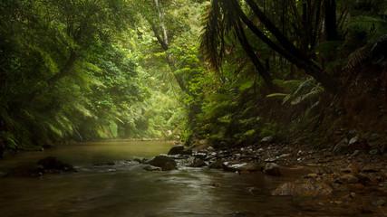 Jungle rain stream