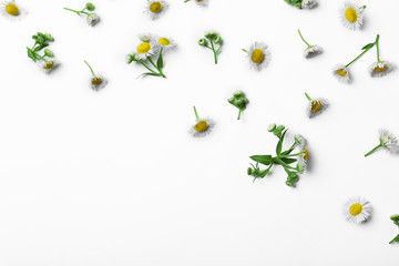 Chamomile flowers scattered on white background