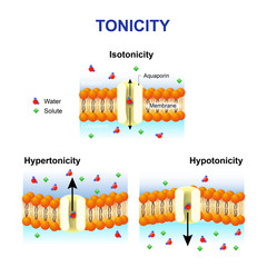 Tonicity and osmosis. Cell membrane and aquaporin.