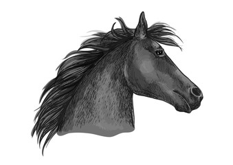 Black racehorse sketch with horse head