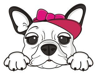 girl, cap, pink, bow, dog, puppy, isolated, cartoon, pet, bulldog, french, animal, illustration, french bulldog,