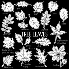 Pictograms Set, Tree Leaves, Dogrose, Oak, Iberian Oak, Maple, Liquidambar, Hawthorn, Poplar Silver, Hazel, Elm, Birch, Linden, Rowan, Chestnut, Buckeye, Viburnum, Chokeberry, Lilac and Teak. Vector